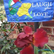 bearded, iris, plant, bulbs, louisiana, nursery,